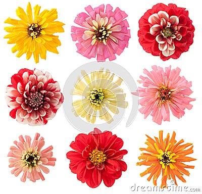 Favourite garden flowers set