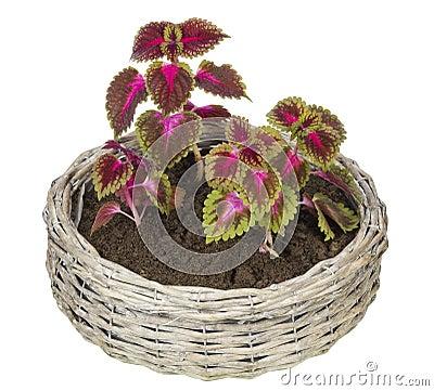 Favourite indoor plants