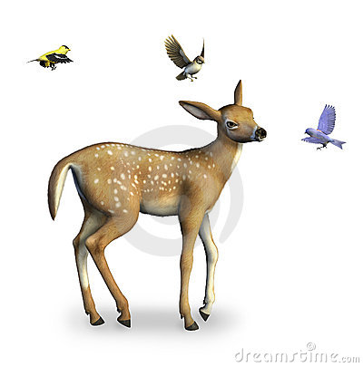 Free Fawn With Birds Includes Clipping Path Stock Images - 171164