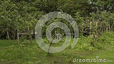 Fazenda de Árvore Supercultivada vídeos de arquivo