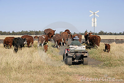 Fazendeiro e gado