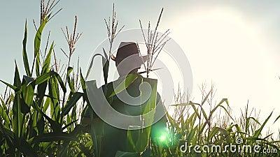 Fazendeiro está examinando brotos de milho Conceito de atividade agrícola O fazendeiro Businessman com tablet explora seu video estoque