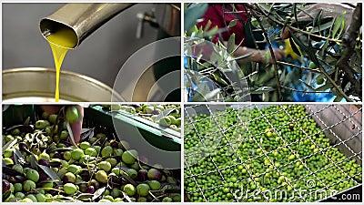 Fazendo o azeite com azeitonas no moinho - colagem