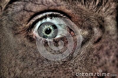 Fearful eye