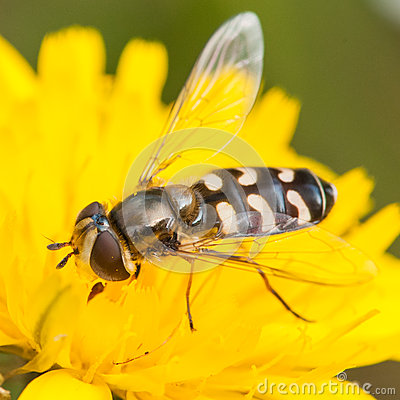 Feasting On Yellow