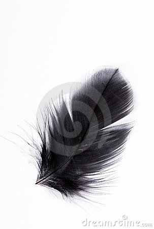 Free Feather Stock Photography - 10972942