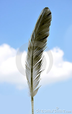Free Feather Royalty Free Stock Images - 13876169