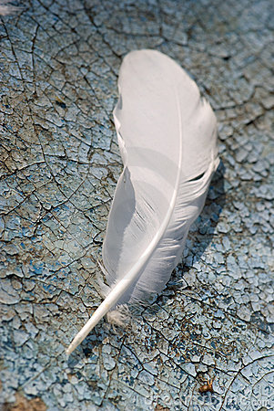 Feather alone