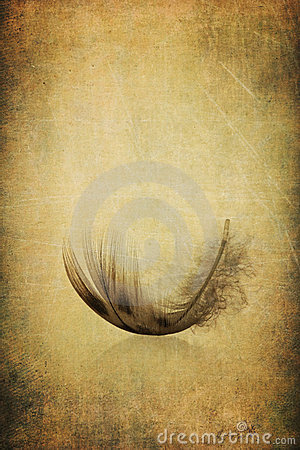 Feather on antique grunge textured background
