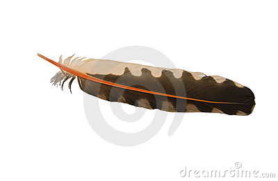 Feather of Bird