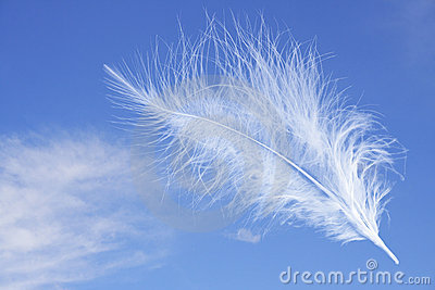 Feather on the blue sky