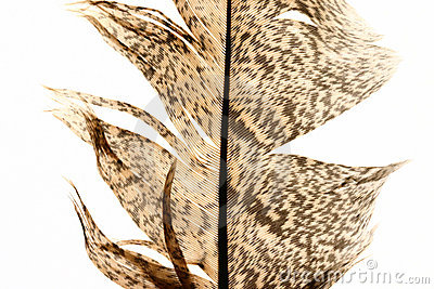 Feather close-up 5