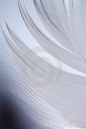Feather closeup