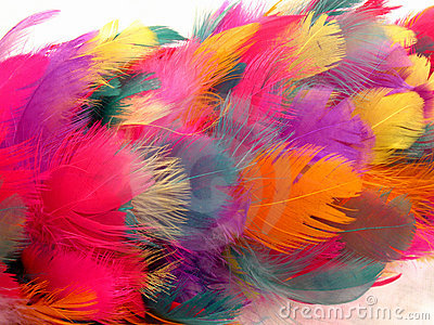Feather Duster Abstract