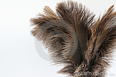 Feather duster close-up on a white background