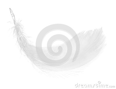 Feather, isolated on the white background.
