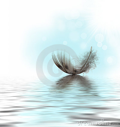 Free Feather On Water Stock Photo - 19291740