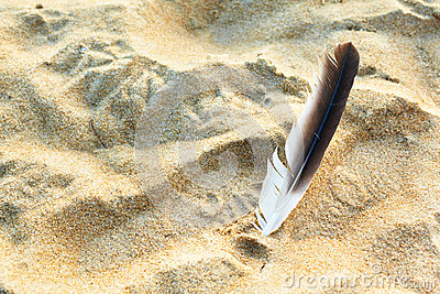 Feather and sand