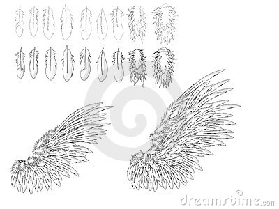 Feather and wings