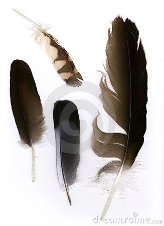 Free Feathers Stock Photography - 126132