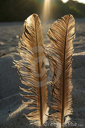 Free Feathers Against The Sun 3 Royalty Free Stock Photo - 251565