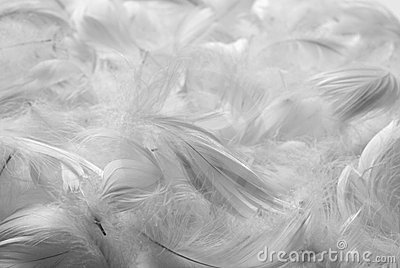 Feathers bw background