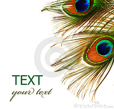 Free Feathers Of Peacock Royalty Free Stock Image - 12283306