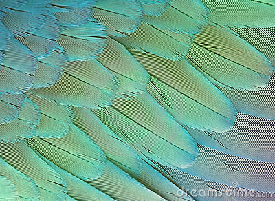 feathers texture