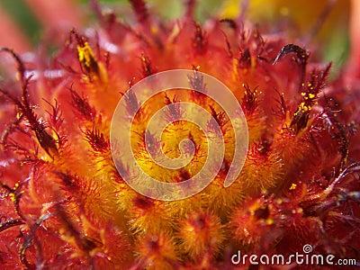 Feathery Flower