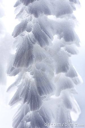Free Feathery Icicles  4 Royalty Free Stock Photo - 5259945