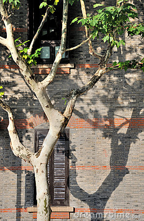 Featured architecture and phoenix tree with shadow