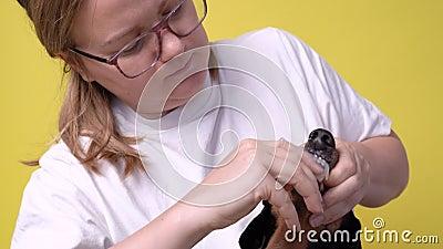 Fechar o dono escova cuidadosamente os dentes de silicone frontal com um pincel de cão macio sobre um fundo amarelo filme