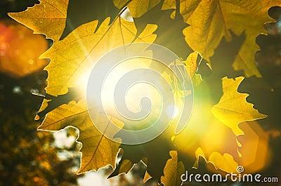 Feche acima das folhas de outono textura e das raias do sol