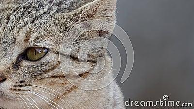 Feche a face dos animais de gatos filme