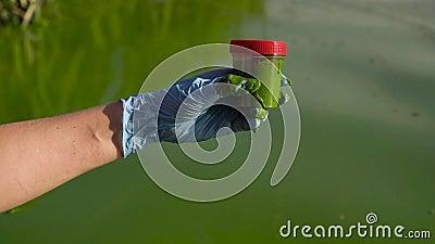 Fecho da mão colhendo uma amostra de água do rio cheia de algas verdes em recipiente vídeos de arquivo