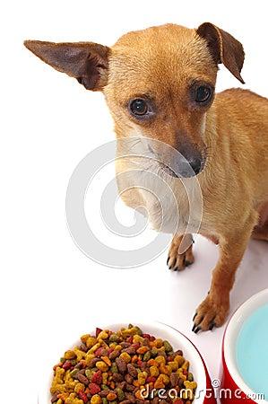 Free Feed Me Stock Photos - 2620063