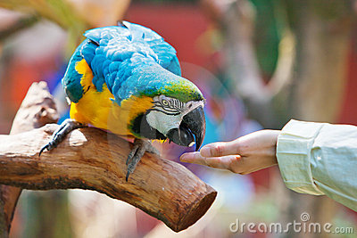 Feed the parrot