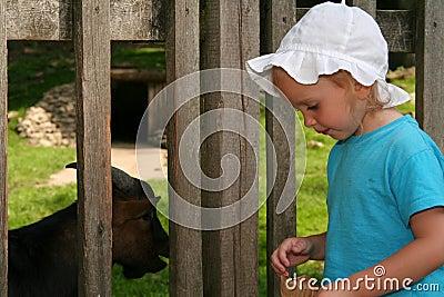 Feeding animal