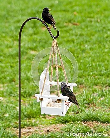 Free Feeding Backyard Birds Stock Photography - 14452712