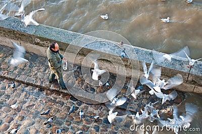 Feeding bird Editorial Photo