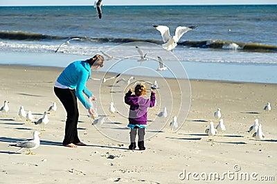 Feeding birds at the beach