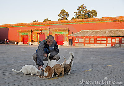Feeding Cats Editorial Stock Photo