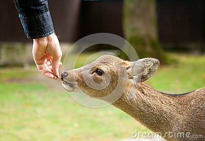 Feeding a deer in Nara