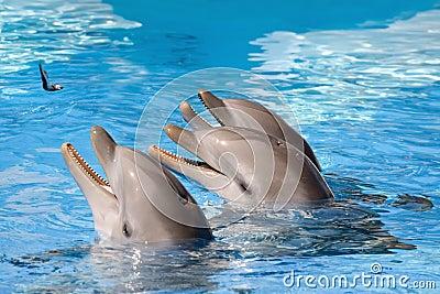 Feeding of dolphins in aquarium