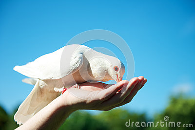 Feeding a dove