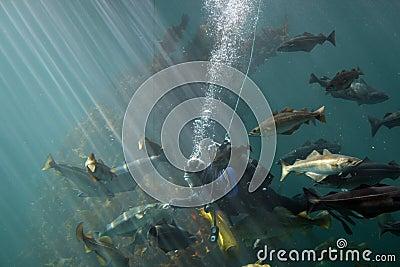 Feeding fish