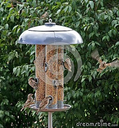 Feeding and Flying