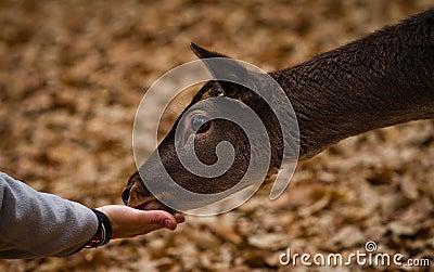 Feeding a mammal