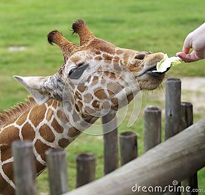 Feeding me