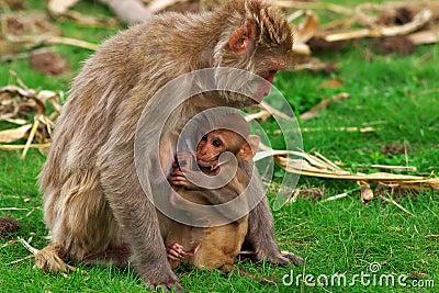 Feeding monkey